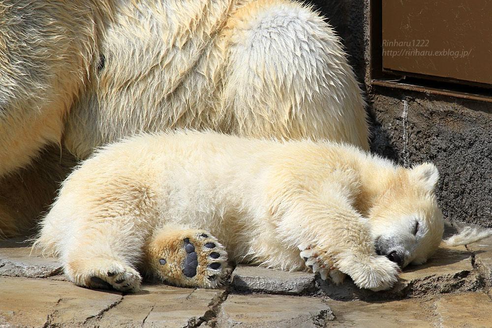 2015.4.30 円山動物園☆ホッキョクグマのララとリラ<その1>【Polar bear】_f0250322_22521790.jpg