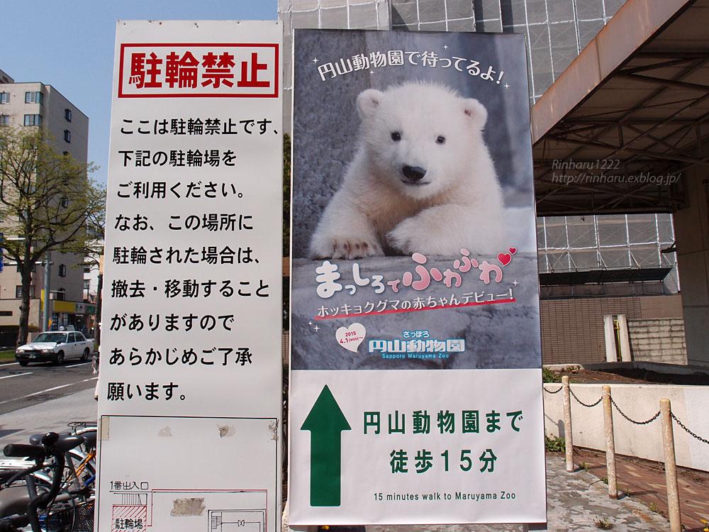 2015.4.30 円山動物園☆ホッキョクグマのララとリラ<その1>【Polar bear】_f0250322_22523975.jpg