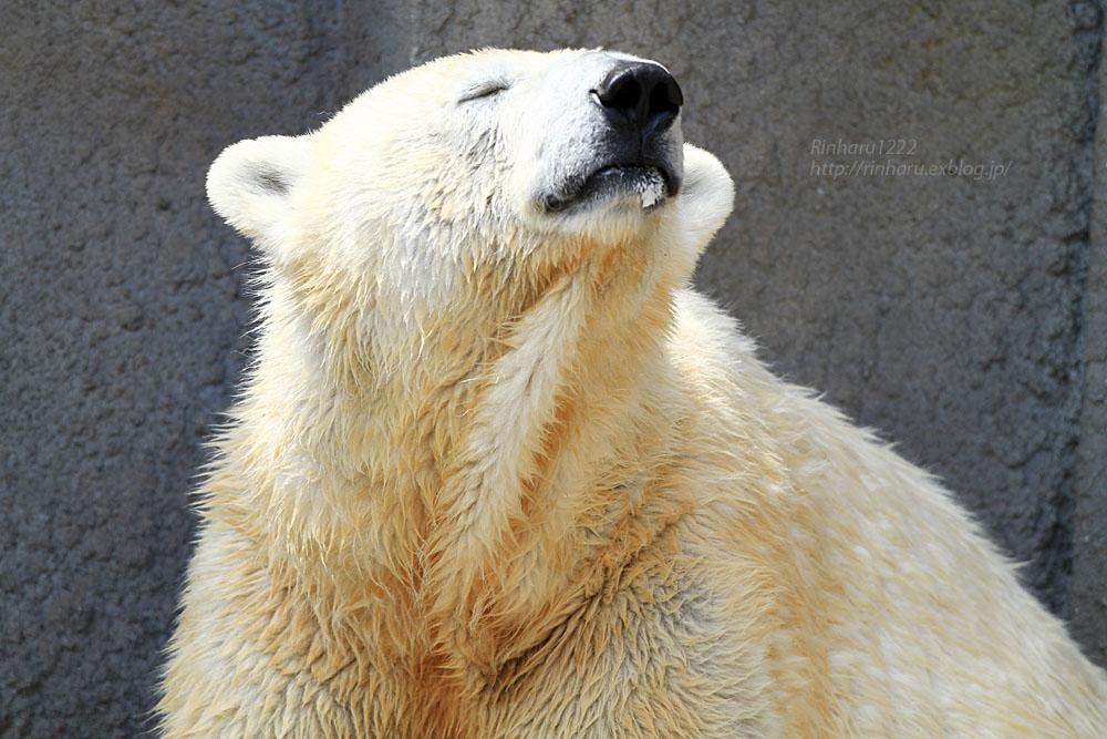 2015.4.30 円山動物園☆ホッキョクグマのララとリラ<その1>【Polar bear】_f0250322_225246.jpg