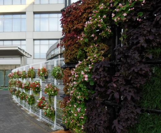 花と緑でおおぶを元気に!_f0139333_22397.jpg