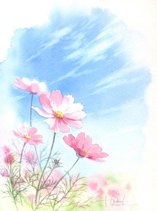 秋桜 稲 南瓜 水彩画_f0176370_1350157.jpg
