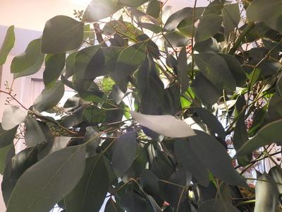 オークリーフ(秋の匂い)_f0049672_18145179.jpg