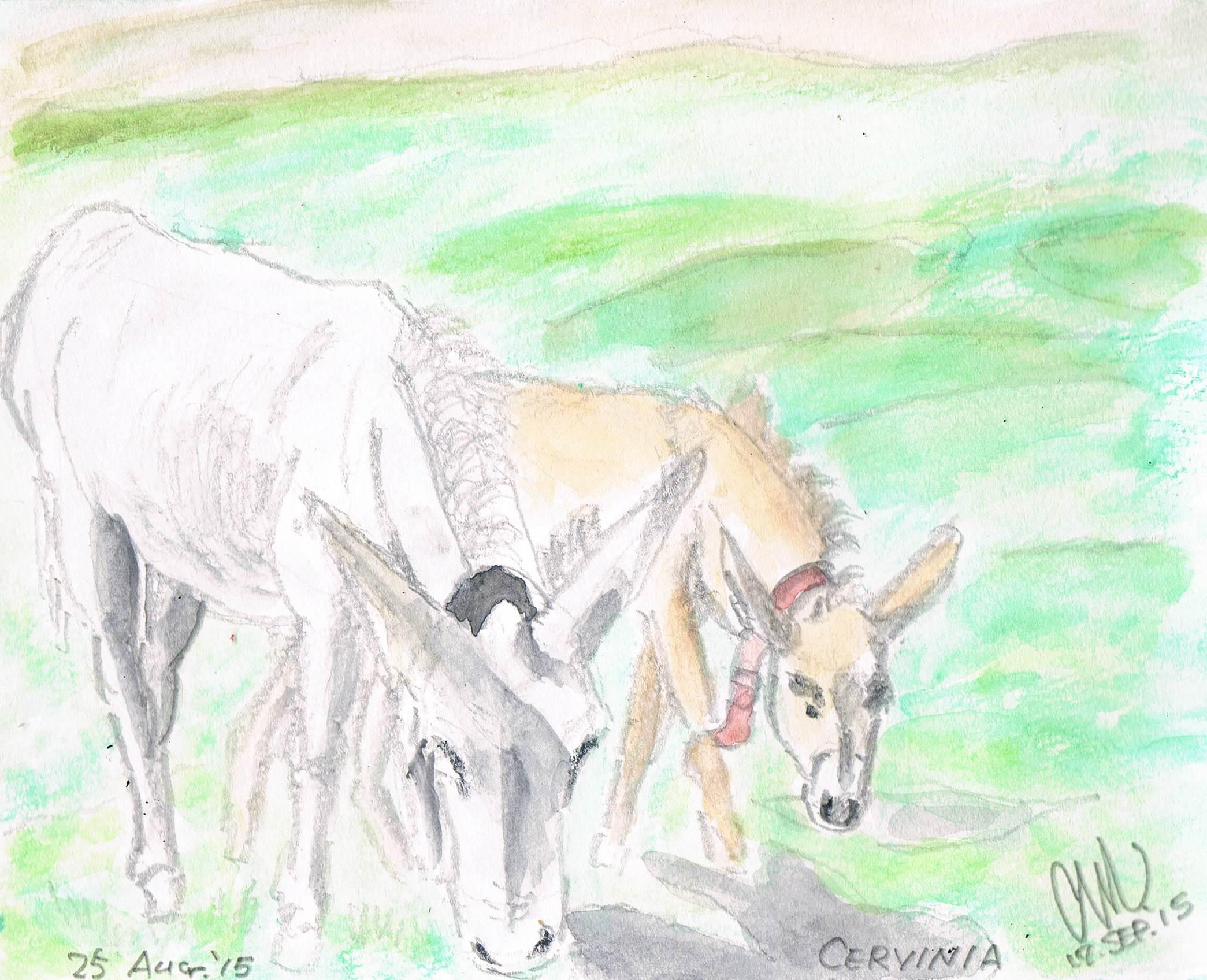 チェルビニアの驢馬_e0232277_1046452.jpg