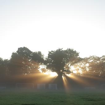朝日を浴びて_c0200002_1940306.jpg