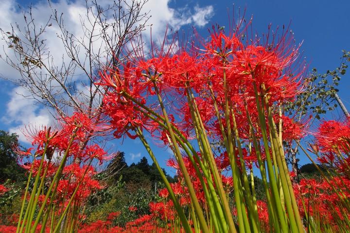 深山の花園_a0268412_22141611.jpg