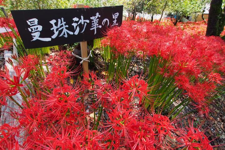 深山の花園_a0268412_2214961.jpg