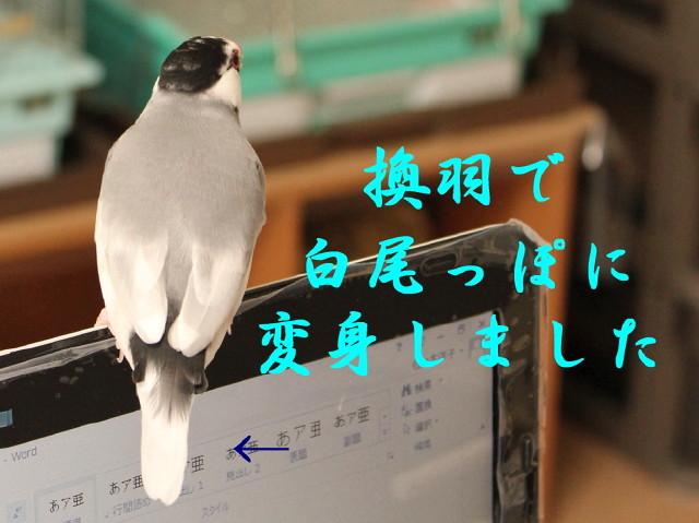 c0365734_22395007.jpg