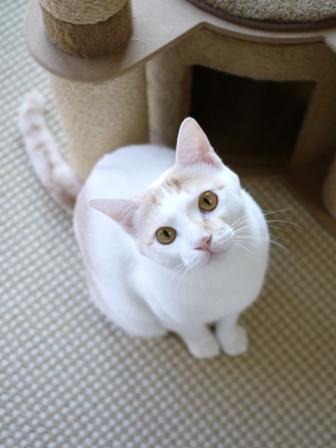 猫のお留守番 はるちゃんソルくん編。_a0143140_2191310.jpg