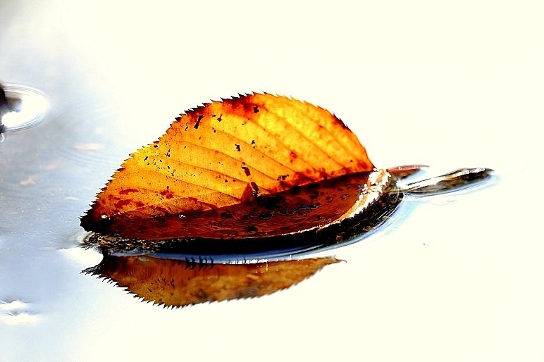 一瞬の夏、そして秋_b0314043_20071607.jpg