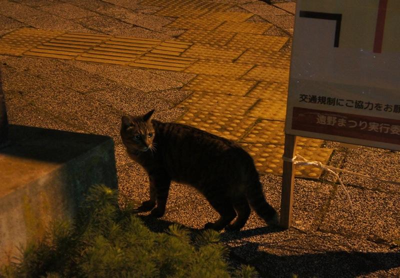 祭りの夜、ネコの夜遊び_d0001843_19405433.jpg