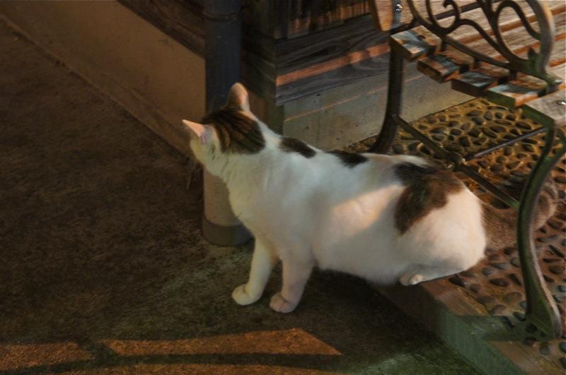 祭りの夜、ネコの夜遊び_d0001843_19422842.jpg