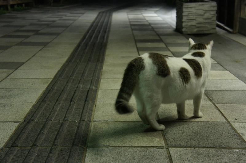 祭りの夜、ネコの夜遊び_d0001843_19433954.jpg