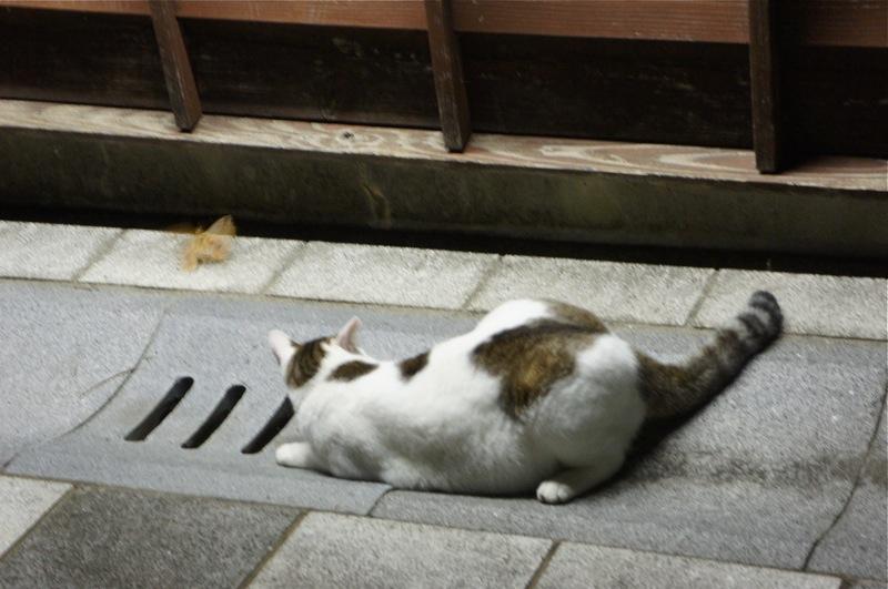 祭りの夜、ネコの夜遊び_d0001843_19444824.jpg