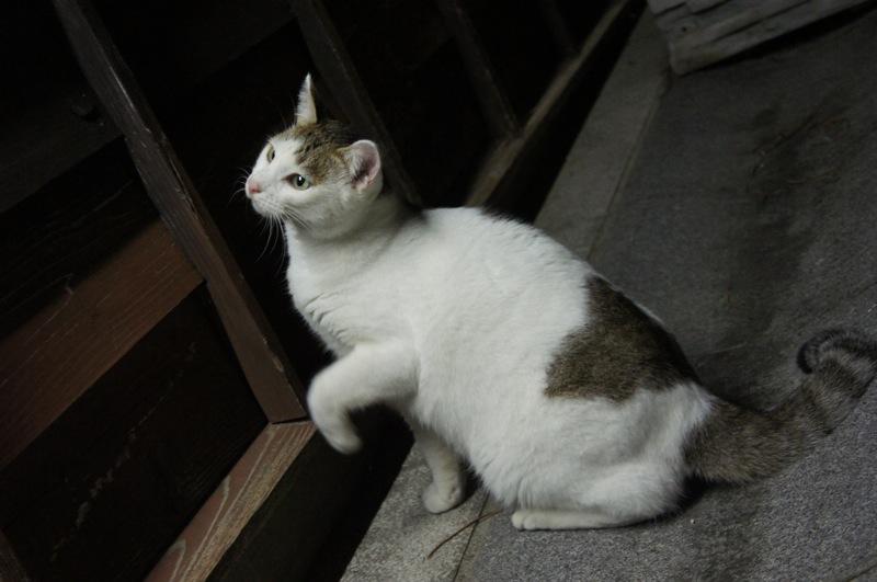 祭りの夜、ネコの夜遊び_d0001843_19451466.jpg