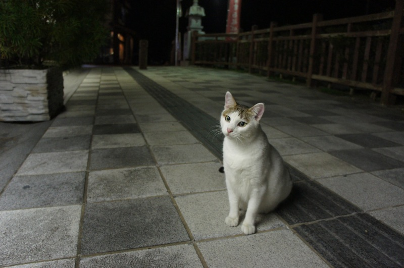 祭りの夜、ネコの夜遊び_d0001843_19453083.jpg