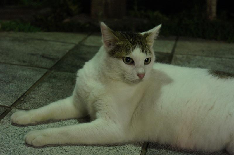 祭りの夜、ネコの夜遊び_d0001843_1946535.jpg