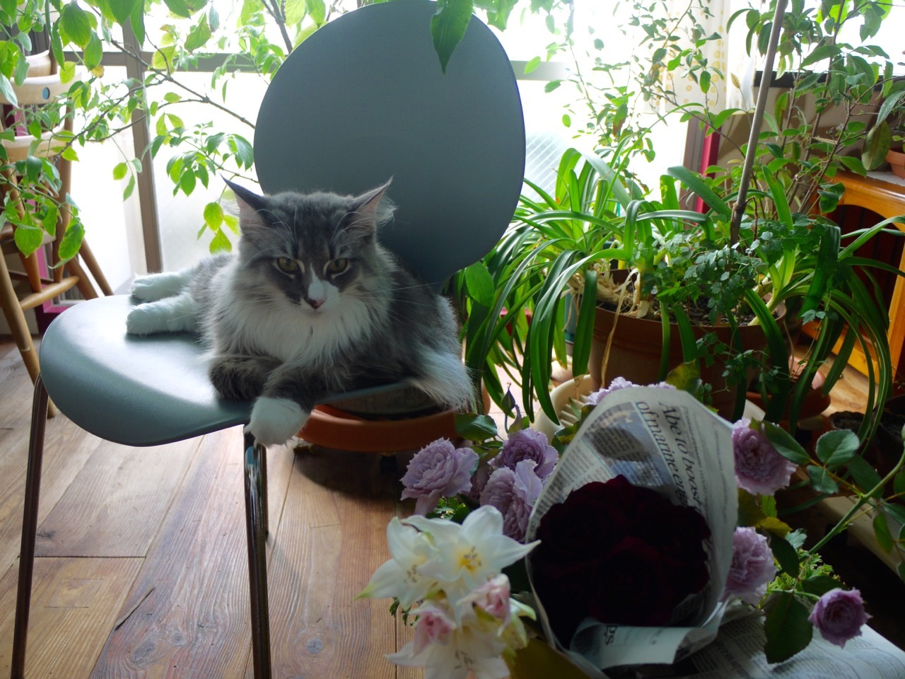 バラとウーラちゃん_e0356356_18162378.jpg