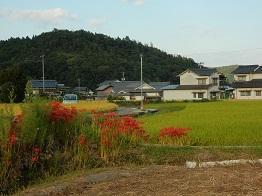 里山に朱色のいろどり、ヒガンバナ_e0175370_2012187.jpg