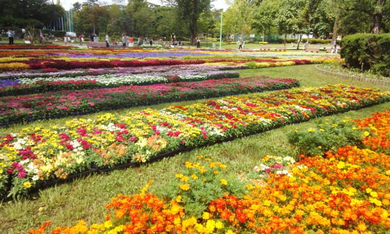全日本花いっぱい静岡大会_f0059673_16414012.jpg