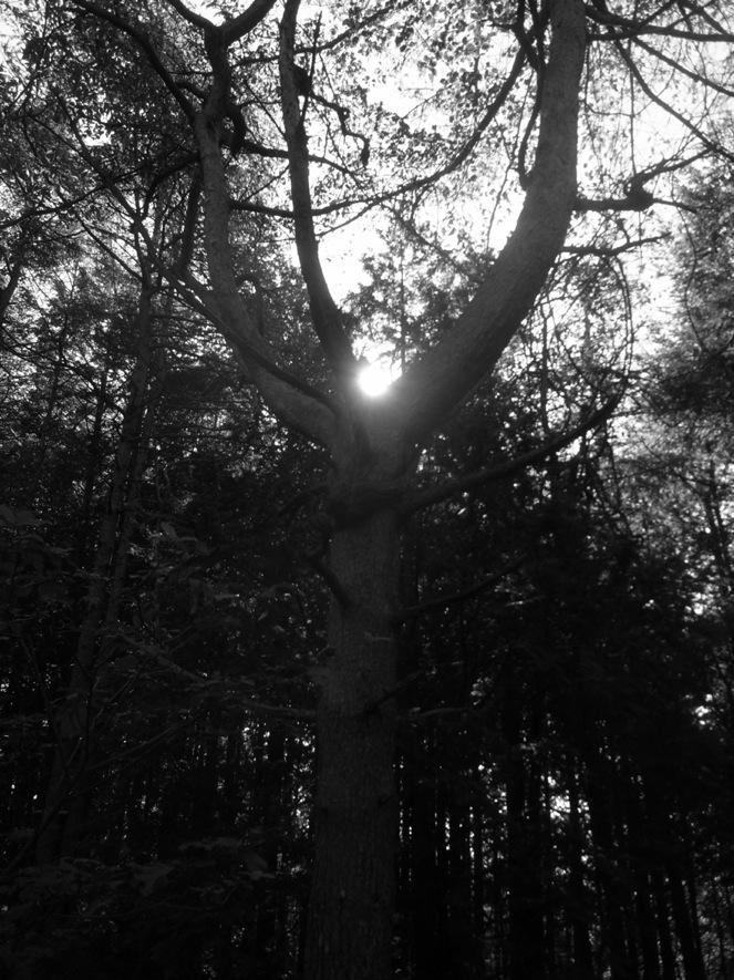 木になった_a0232906_202096.jpg
