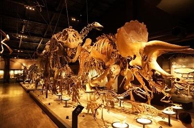 恐竜博物館_b0228113_12040560.jpg
