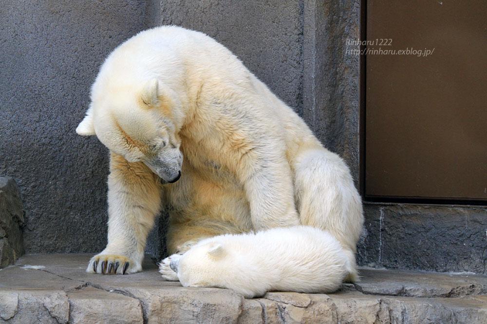 2015.4.30 円山動物園☆ホッキョクグマのララとリラ<その2>【Polar bear】_f0250322_18565623.jpg