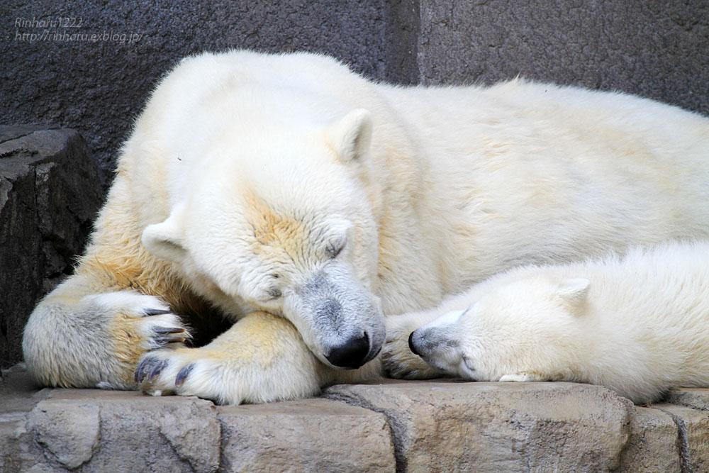 2015.4.30 円山動物園☆ホッキョクグマのララとリラ<その2>【Polar bear】_f0250322_1857025.jpg