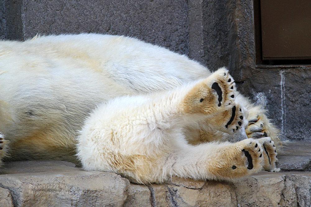 2015.4.30 円山動物園☆ホッキョクグマのララとリラ<その2>【Polar bear】_f0250322_18571356.jpg