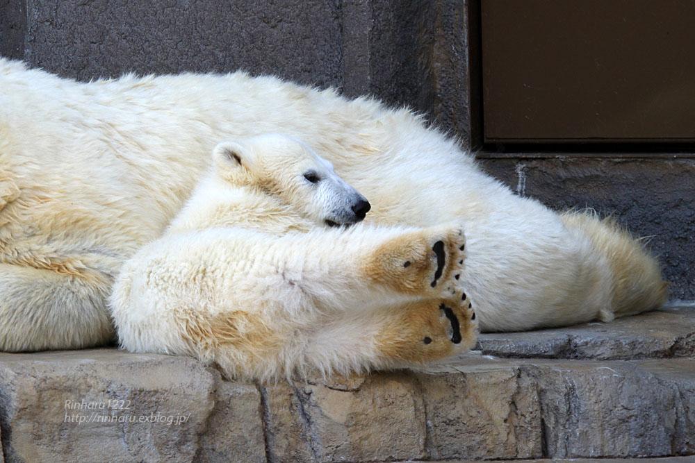 2015.4.30 円山動物園☆ホッキョクグマのララとリラ<その2>【Polar bear】_f0250322_18571666.jpg