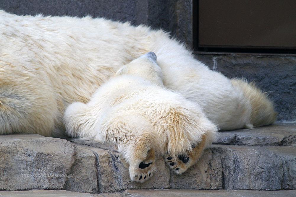 2015.4.30 円山動物園☆ホッキョクグマのララとリラ<その2>【Polar bear】_f0250322_18571986.jpg