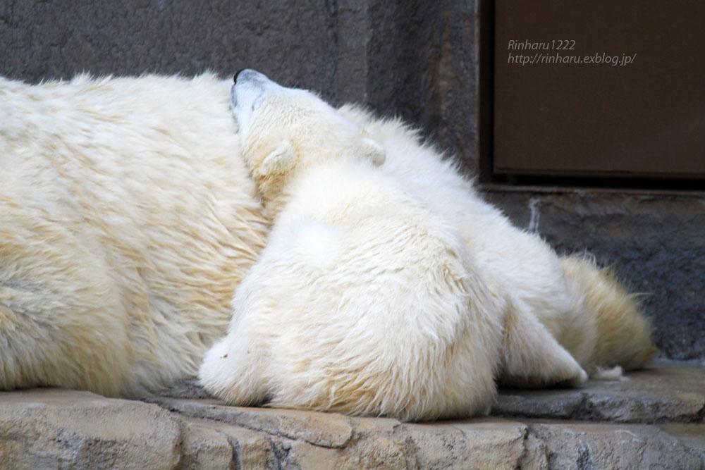 2015.4.30 円山動物園☆ホッキョクグマのララとリラ<その2>【Polar bear】_f0250322_18572224.jpg
