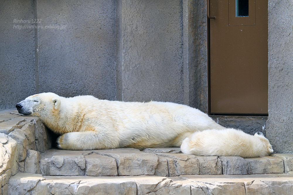 2015.4.30 円山動物園☆ホッキョクグマのララとリラ<その2>【Polar bear】_f0250322_18572820.jpg