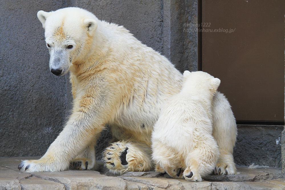 2015.4.30 円山動物園☆ホッキョクグマのララとリラ<その2>【Polar bear】_f0250322_18573148.jpg