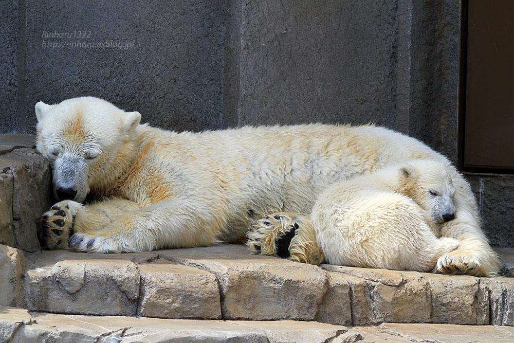 2015.4.30 円山動物園☆ホッキョクグマのララとリラ<その2>【Polar bear】_f0250322_18573886.jpg