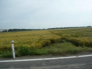 稲刈り と シルバーウィーク初日_c0369433_06175867.jpg