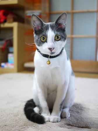 猫のお留守番 ルナくん編。_a0143140_22592093.jpg