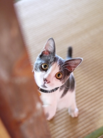猫のお留守番 ルナくん編。_a0143140_2311823.jpg