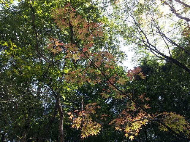 秋到来♪♪♪_f0244543_9313545.jpg