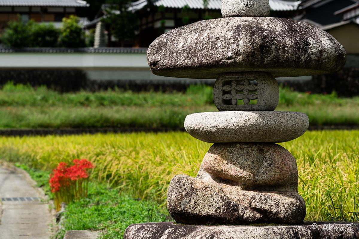 京都 大原の里の彼岸花 -1-_f0152550_18551156.jpg