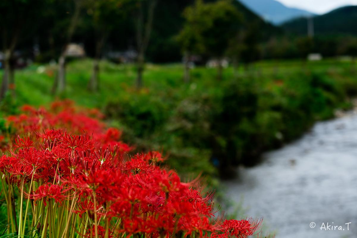 京都 大原の里の彼岸花 -1-_f0152550_18593021.jpg