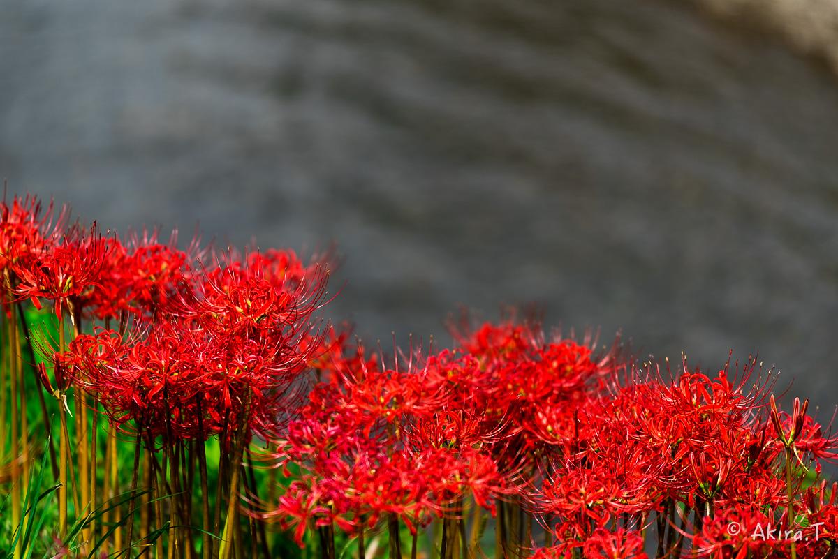 京都 大原の里の彼岸花 -1-_f0152550_1911588.jpg