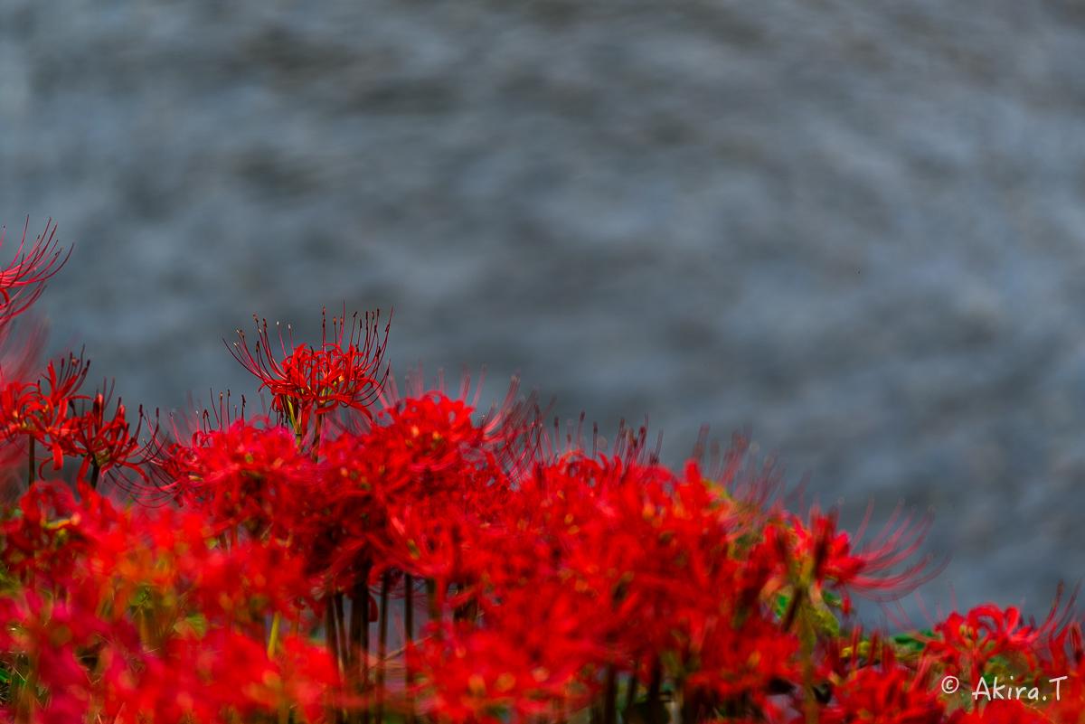 京都 大原の里の彼岸花 -1-_f0152550_1913238.jpg