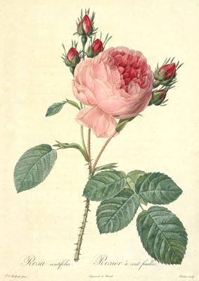 世界ふしぎ発見 「ナポレオンの幸運の女神 バラの女王ジョゼフィーヌ」_e0356356_17033495.jpg
