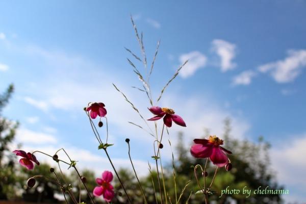 秋の寄せ植え _e0298782_1924401.jpg