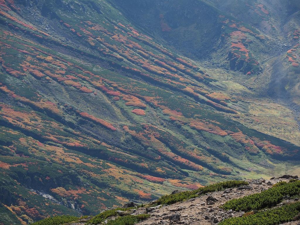 紅葉登山、9月16日-愛別岳から安足間分岐編-_f0138096_9374377.jpg