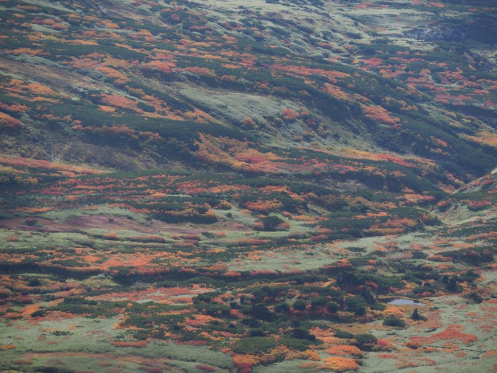 紅葉登山、9月16日-愛別岳から安足間分岐編-_f0138096_9383933.jpg