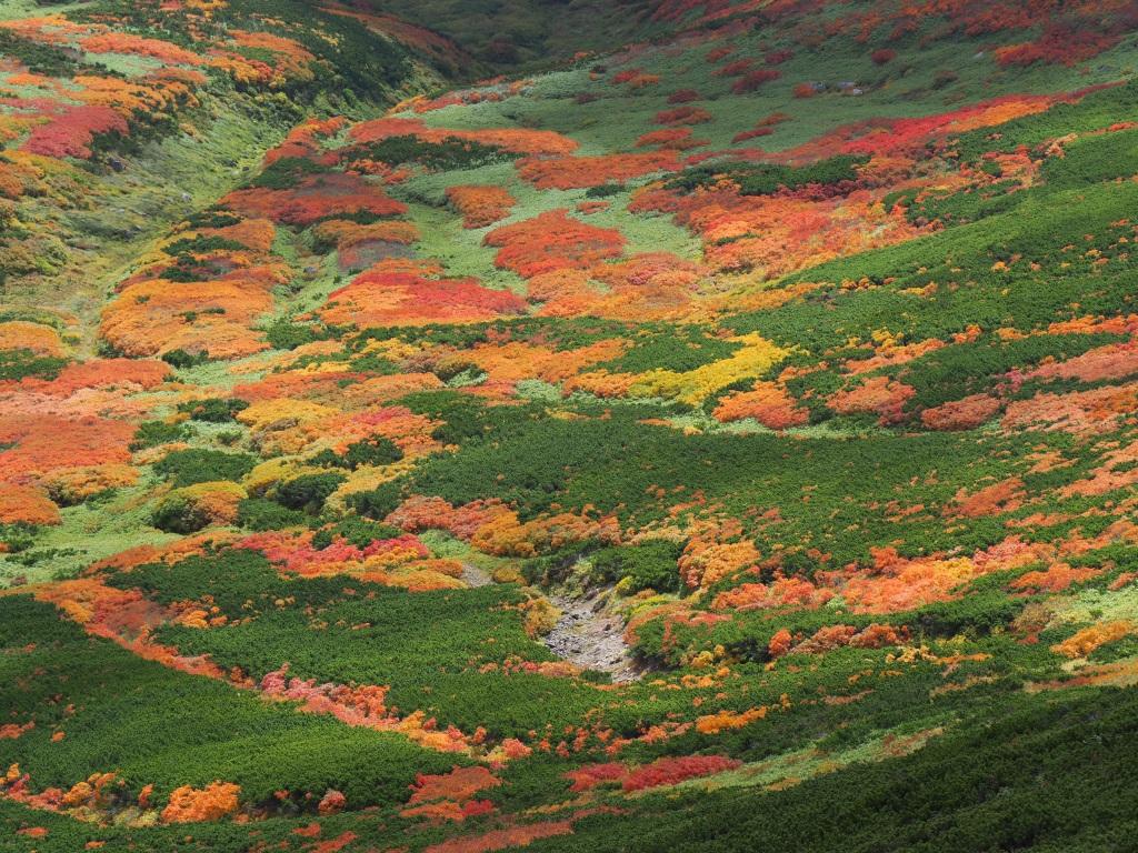 紅葉登山、9月16日-愛別岳から安足間分岐編-_f0138096_9393819.jpg