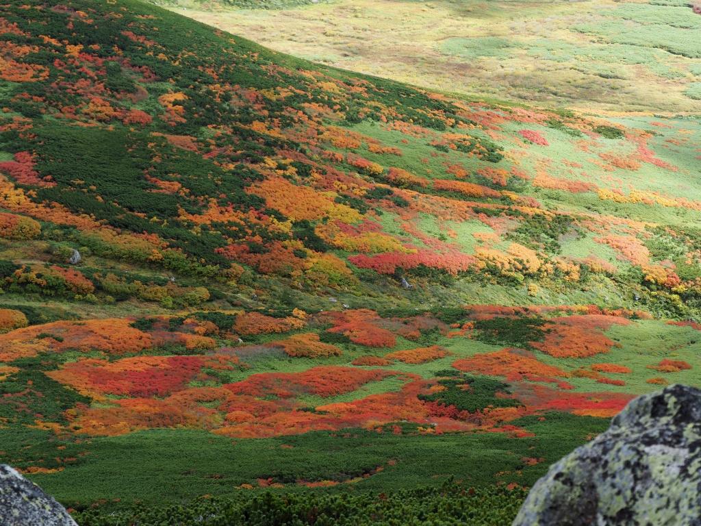 紅葉登山、9月16日-愛別岳から安足間分岐編-_f0138096_9401237.jpg