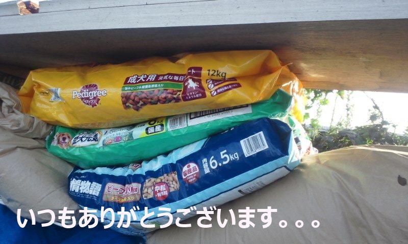 【移動先募集】現場に遺棄された秋田犬・雑種犬・子猫たち_f0242002_223942.jpg
