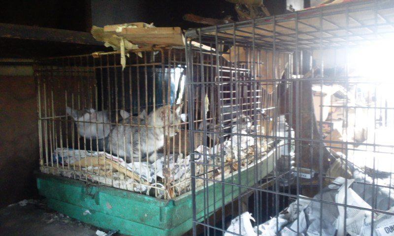 【移動先募集】現場に遺棄された秋田犬・雑種犬・子猫たち_f0242002_231427.jpg